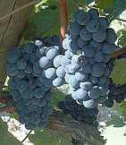 vins du sud ouest cabernet franc