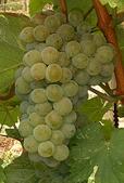 vins du sud ouest cabernet sauvignon