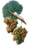 vin de savoie gringet