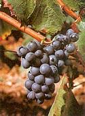 vins du sud ouest negrette