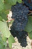 vins du sud ouest tannat