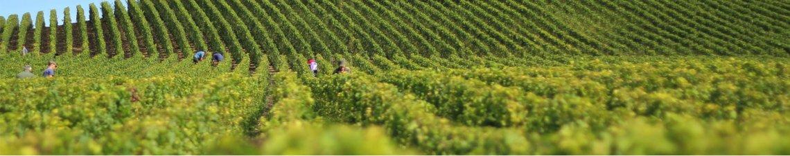 tourisme vins bordeaux