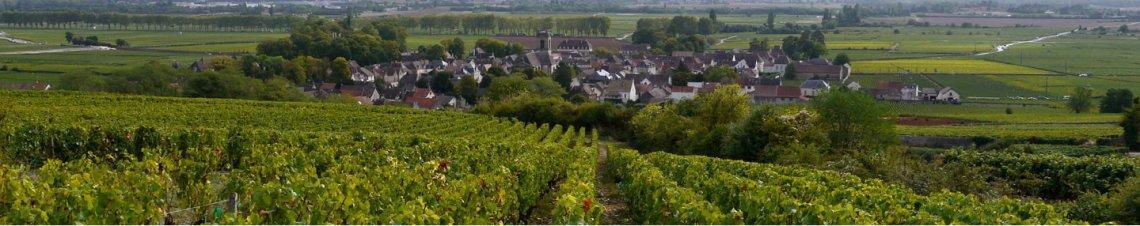 tourisme vins bourgogne
