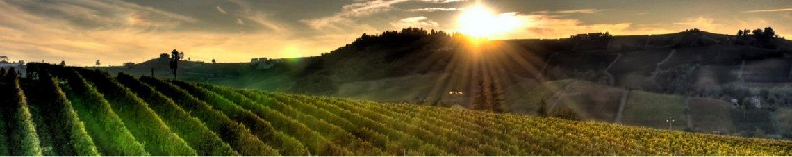tourisme vins champagne