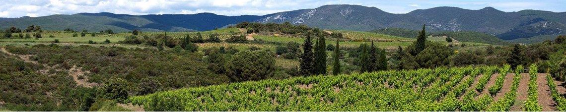tourisme vins languedoc roussillon