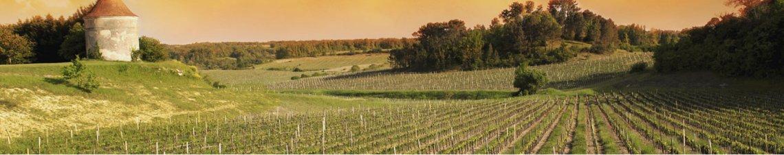 tourisme vins sud ouest