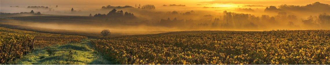 tourisme vins loire centre