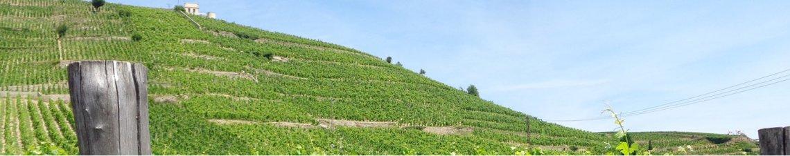 tourisme vins vallée du rhône