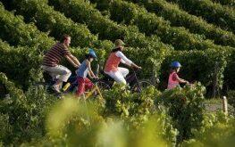 oenotourisme rando vélo vignes