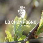 Champagne-dauby