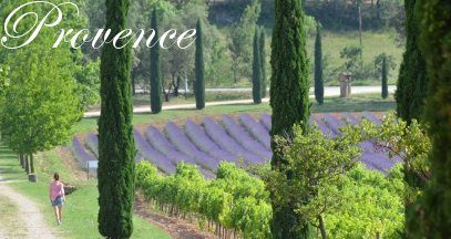 Oenotourisme provence vin