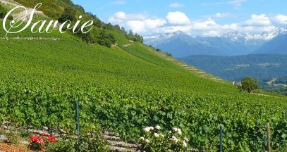 Oenotourisme savoie vin